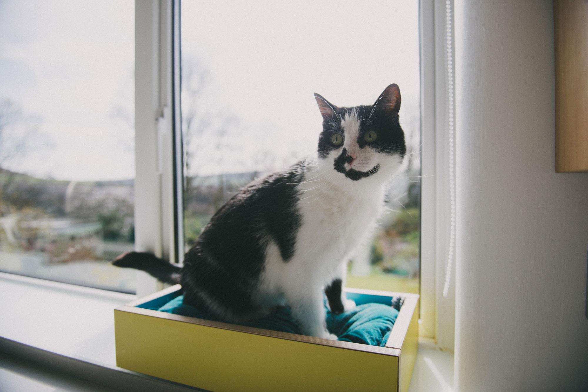 Cat sat in bespoke plywood window box